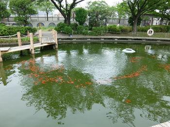 釣り堀7.JPG